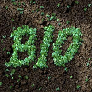 tampon bio 100 % bio et naturel
